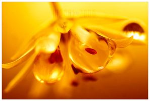 intimacy by werol