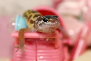Pattenless Leopard Gecko Baby124 by creative1978