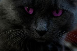 pUrpLe.EyE.CAT by MajaTheMe