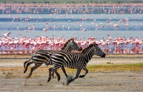 Racing Stripes by Lightkast