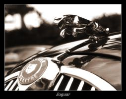Jaguar by bluecube