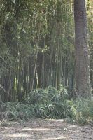 Bamboo by pinknfuzzy4711
