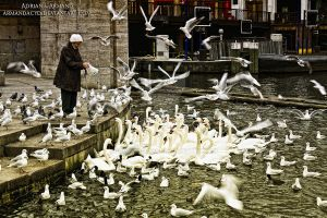 swans and seagulls by Armandacyd