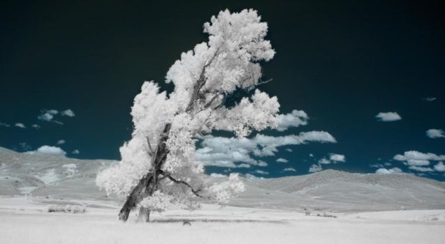 IR tree by GambllingYouth