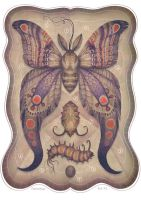 Entomology Tab. VI by V-L-A-D-I-M-I-R