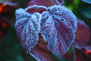 Frosty red leaf by GrnDrgn