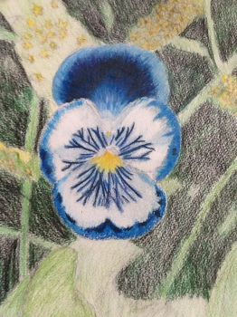 Pansy, prismacolors by Riverwyte