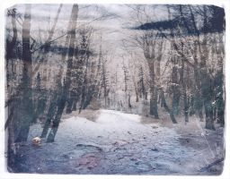 Winter Silence by wreckles
