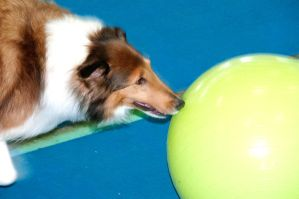 Treibball IV by LDFranklin