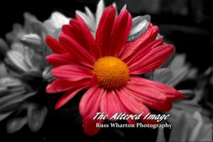 Flowers and Stuff by Russwharton