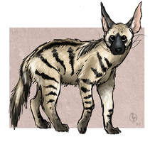 Aardwolf by painted-flamingo