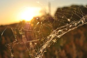 spider web in sunset by LisiTisaKi