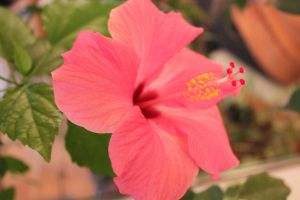 Hibiscus 2 by LunarLuminosity