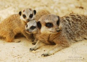 Meercat Family by Shadow-and-Flame-86