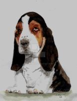 Basset Pup by RamonaQ