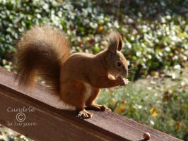 Squirrel 145 by Cundrie-la-Surziere
