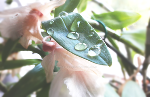 drops by Miracle79