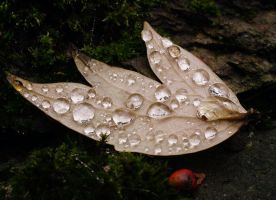fall's raindrops I. by togdurien