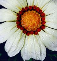 Ring of fire. by RomanceOnTheTarmac
