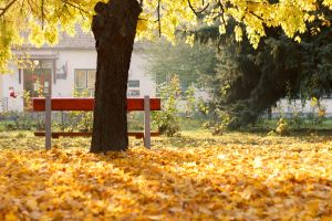 Golden Autumn by sztewe