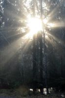 ray of light by efish