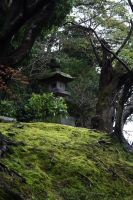 moss landscaping by l337Jacqui