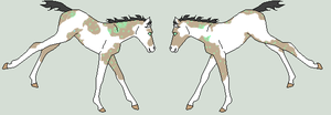 Foal for Affyre by RedOak-Stables
