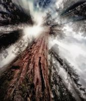 Giant Sequoia, Ray of Light by AugenStudios