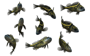 Fish Set 14 by Free-Stock-By-Wayne