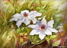Clematis by chatte-bleu