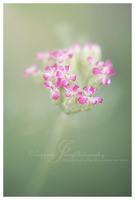 Beauty simple by JunnyPhotography