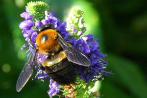 busy bee by bewing