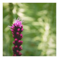 Pink Spikes by Hewnly