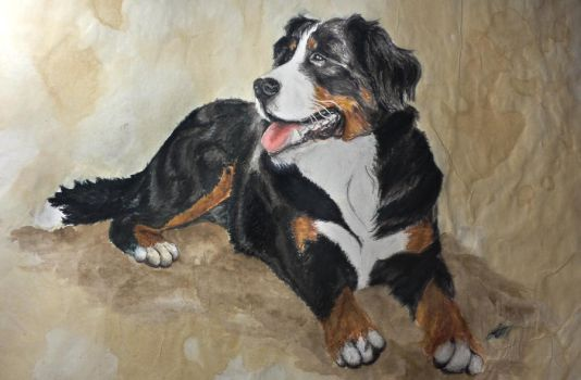 Bernese Mountain Dog by alvija