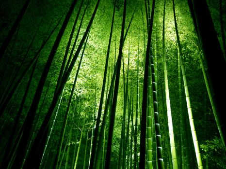 Bamboo Forrest by FishiexFishie