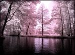 Summer in September VI infrared by MichiLauke