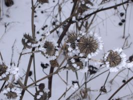 Frozen nature 6 by simplelifegirl