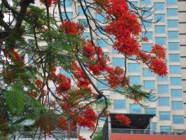 Red flowers by shiyen119