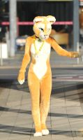 008 Sofia Lioness at EF16 by basil-lion