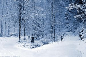 Winter Wonderland by DavidGrieninger