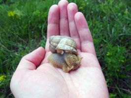 Snail's glance by Vixis24m