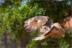 Eagle Owl by Peug