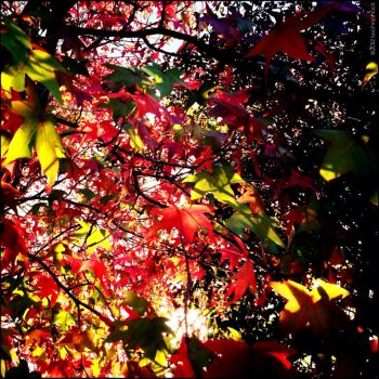 Autumn Colors 5 of 5 by technohoot