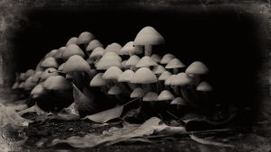 fungi a la Louis Daguerre by vw1956
