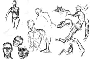 Anatomy sketches by elicenia