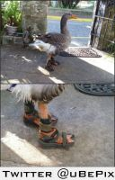 Birkenstock bird by dxdiagbg