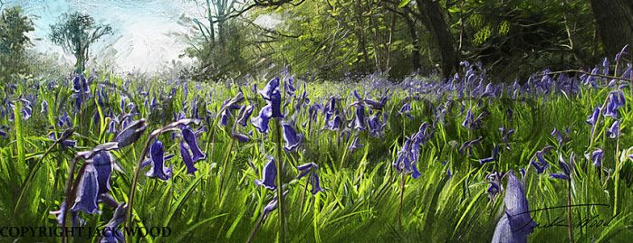 Bluebell Meadow by Jack-Wood