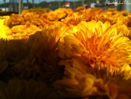 Golden mums close up by MonthBeforeMay92