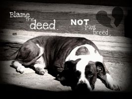 Sweet Pitbull... by emoXchica
