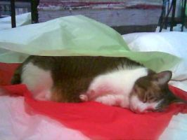 Gift-wrapping is tiring... by pergamjee